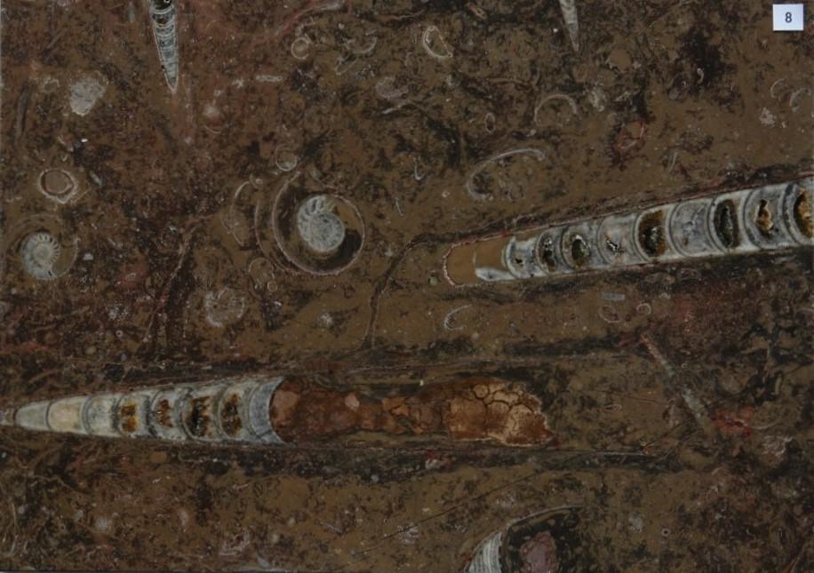 花台 化石石