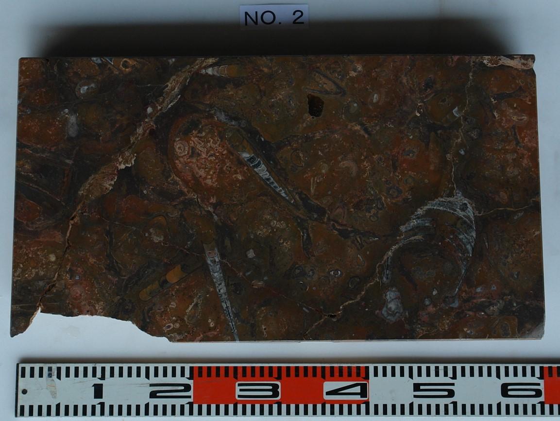 化石石 花台 品番2