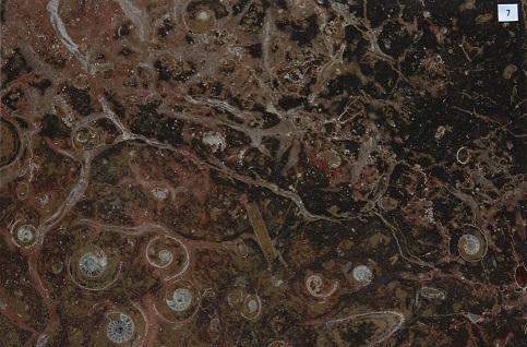 化石石 花台 品番7