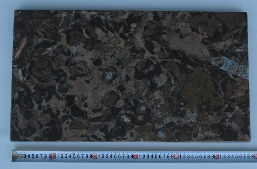 化石石 花台 品番9